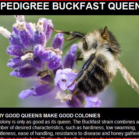 Wonderful website - we know that lots of Irish beekeepers have already ordered these  queen bees!